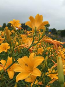De tuinen van Appeltern, dag 15_097