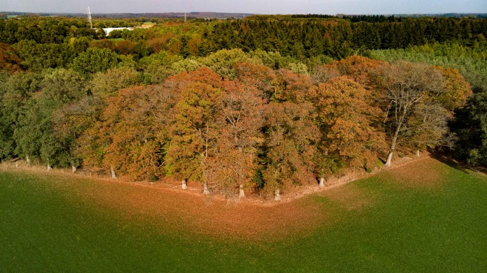 Herfstkleuren in Hof van Twente