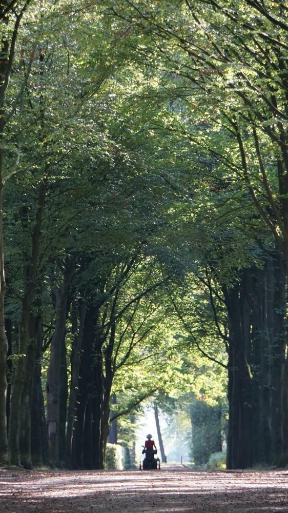 fietser onder een boog van bladeren