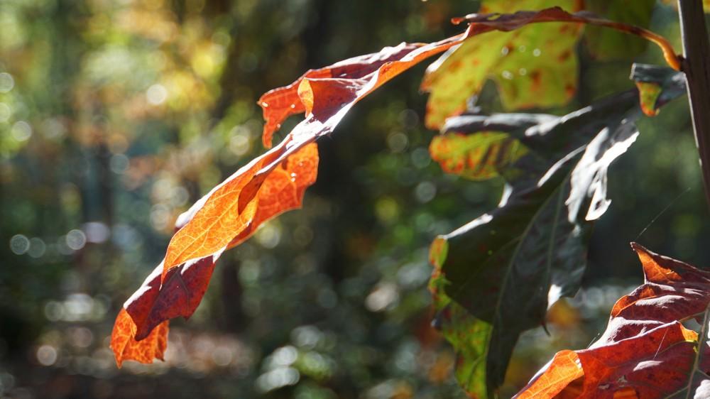 Herfstblad in het Baarnse bos