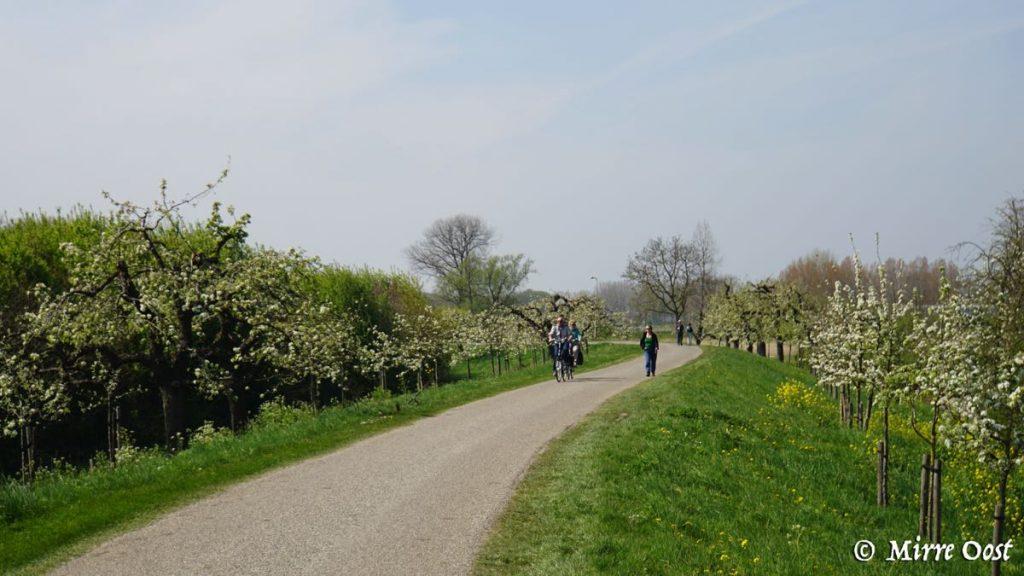 Bloesemroute fietsen 4b
