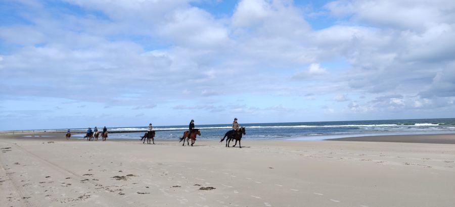 Wat te doen op Vlieland - paardrijden