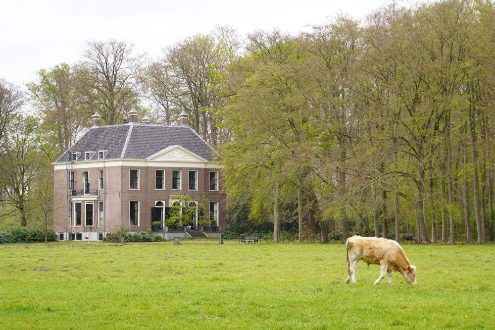 Landgoed-Gooilust-131-Koeien