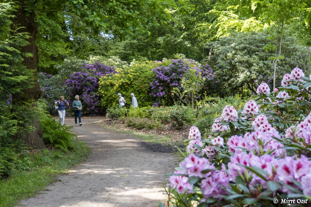 Rododendrons-Gooilust-119