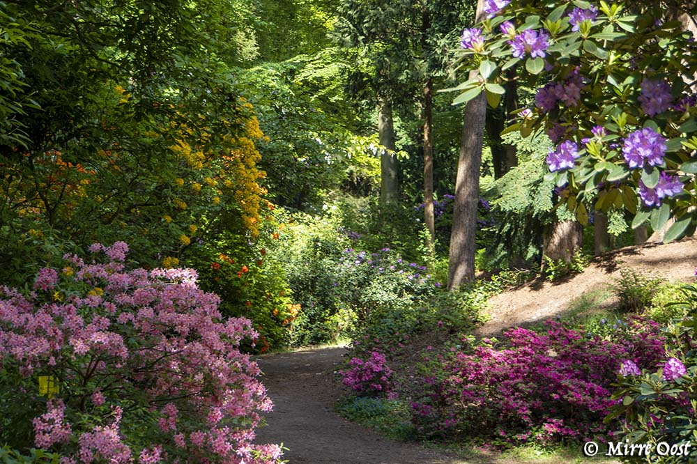 Rododendronvallei Gooilust 147
