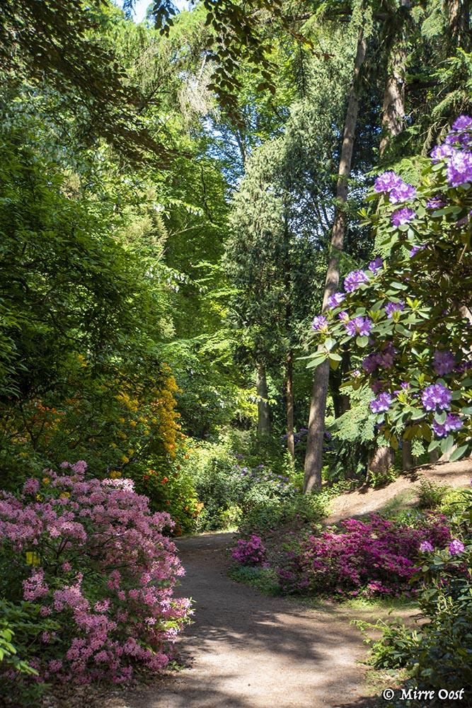 Rododendronvallei-Gooilust-147b