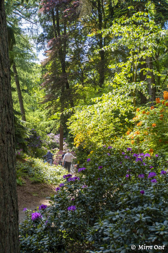 Rododendronvallei-Gooilust-59