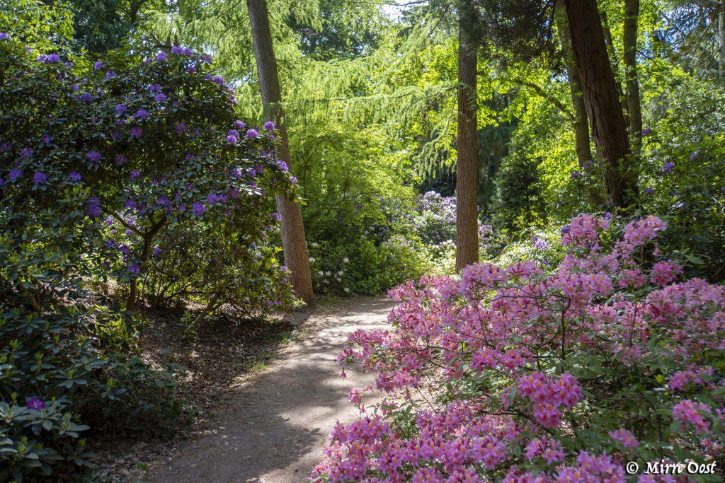 Rododendronvallei-Gooilust-77