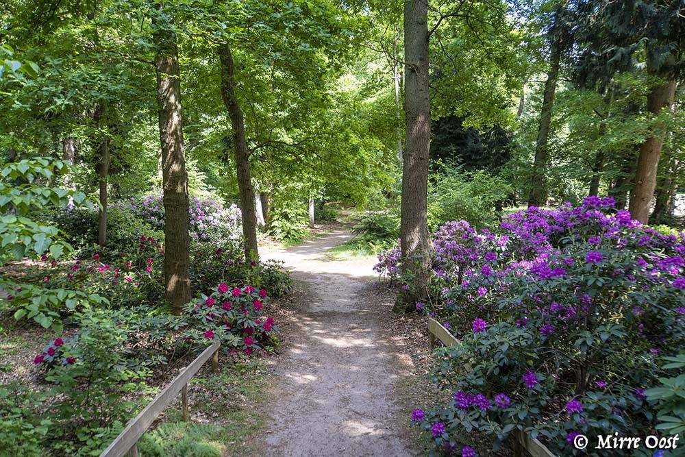 Rododendronvallei-Gooilust-93