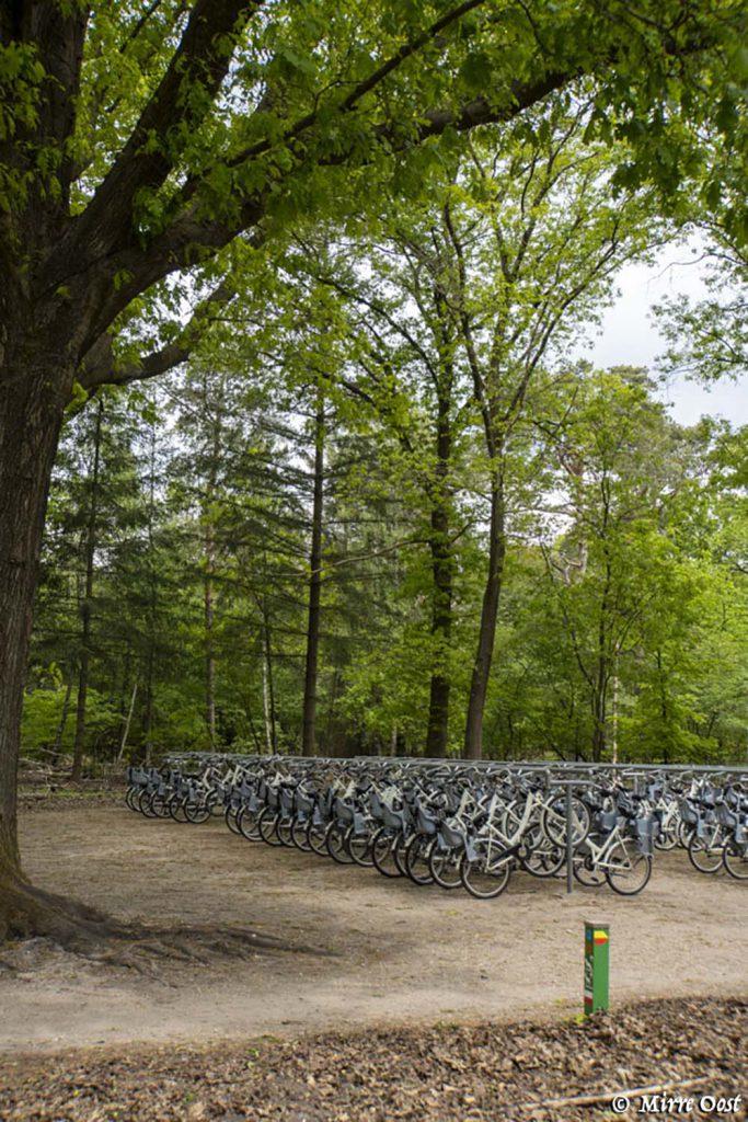 Witte-fietsen-Hoge-Veluwe-83