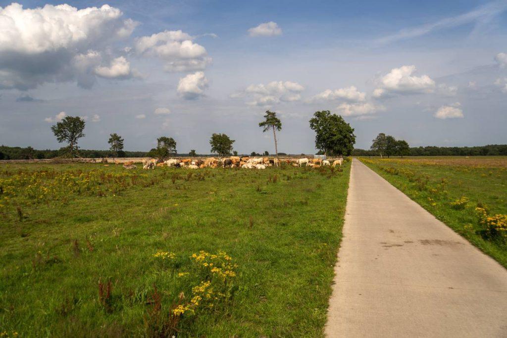 Fietsroute-Dwingelderveld-117