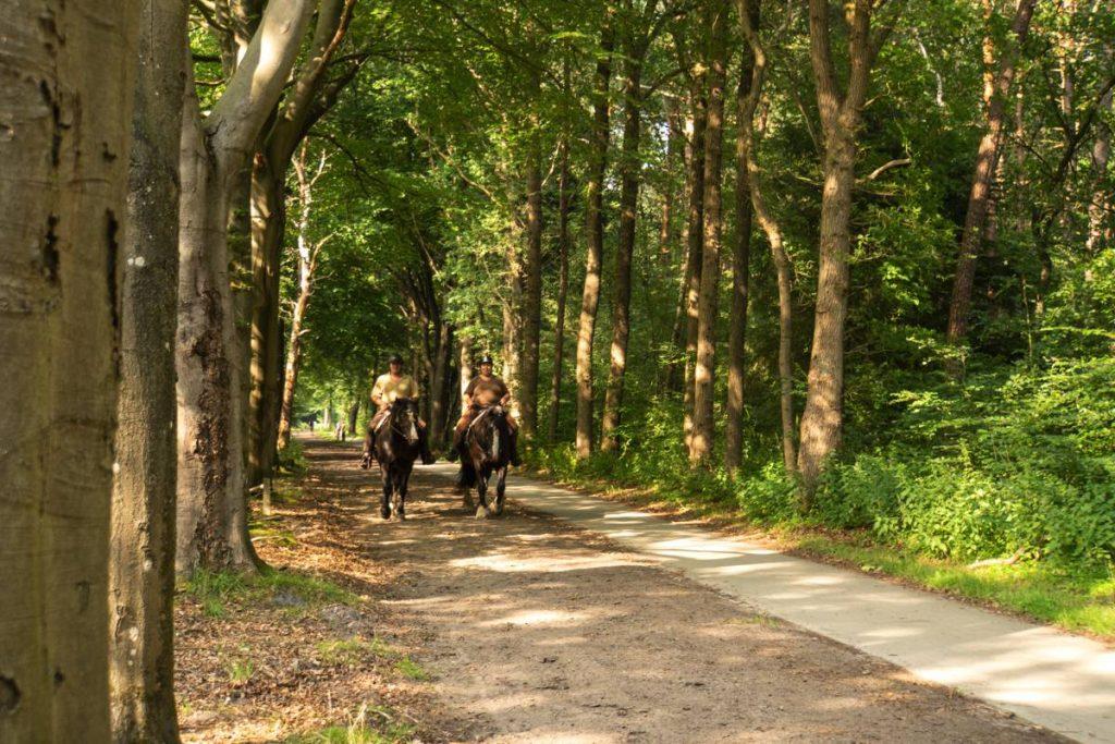 Paardrijden-Dwingelderveld-113