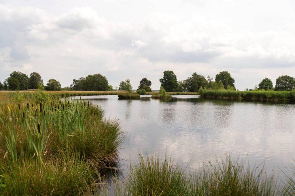 Vennetje-Dwingelderveld-64