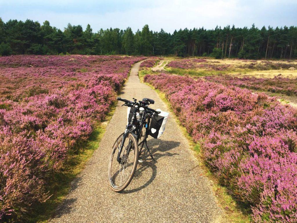 Heide-Nederland-001