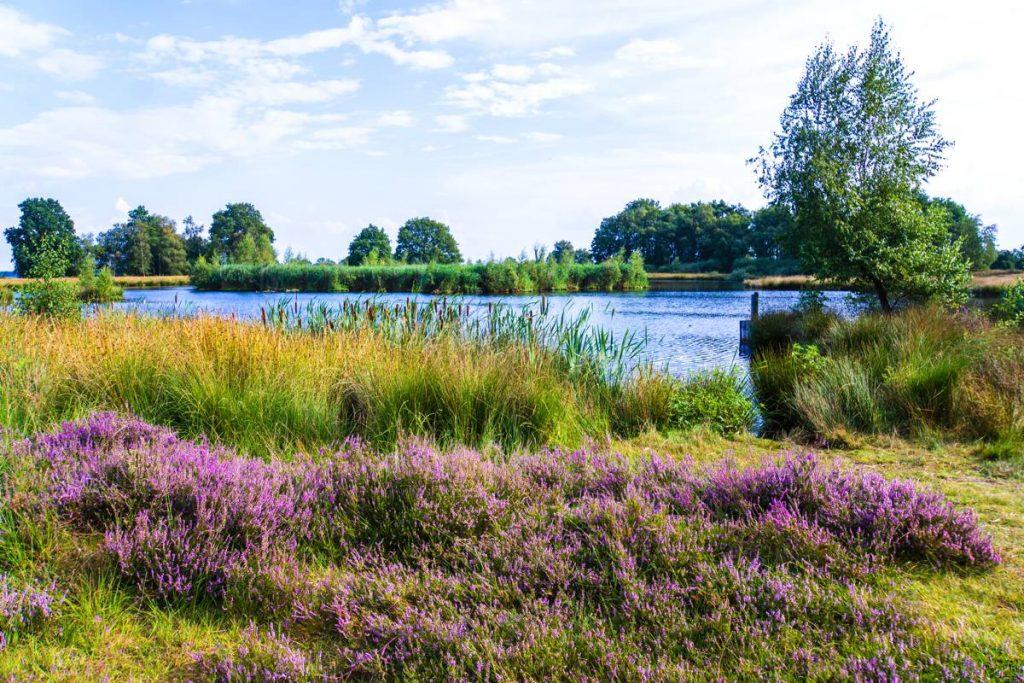 Heide-Nederland-31d
