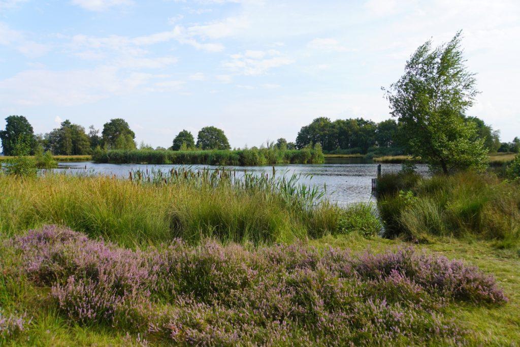 Heideveld-Dwingelderveld-30