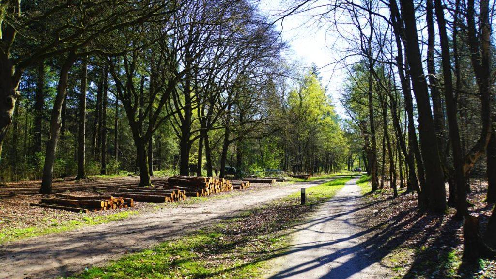 Utrechtse-Heuvelrug-8