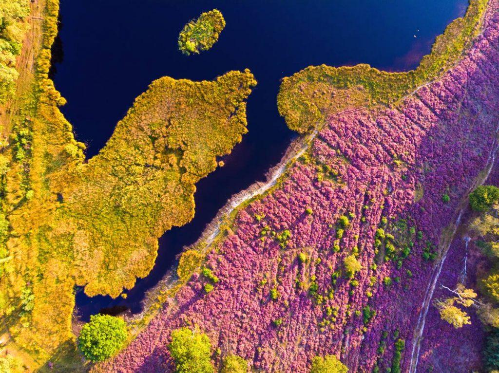 Het Pluismeer, Hilversumse hei in Lage Vuursche