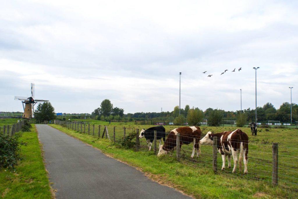 Eiland-IJsselmonde-11