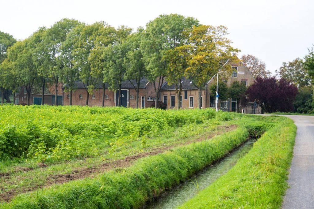 Eiland-IJsselmonde-26