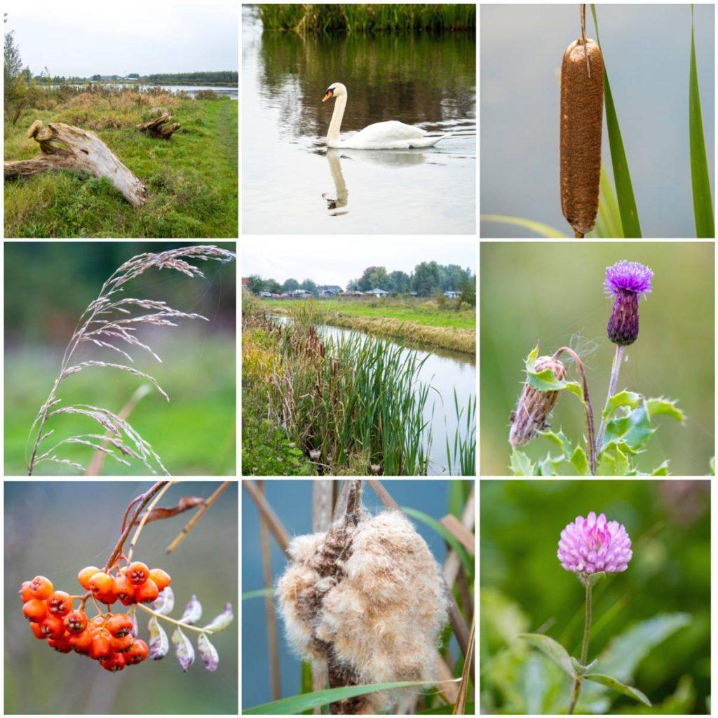 Het-Waalbos-DeNederlandseToerist.nl_
