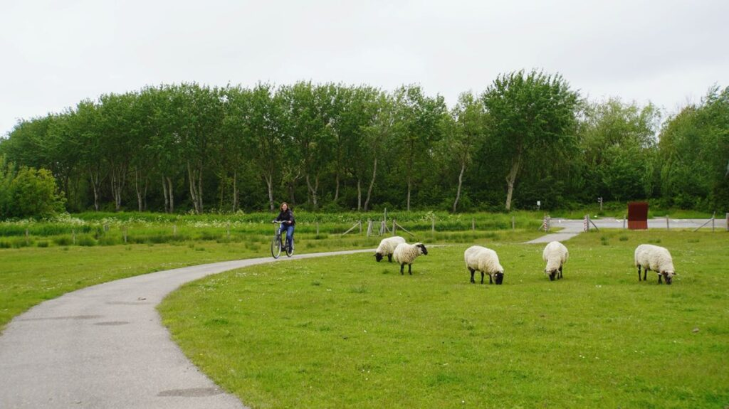 Fietsroute-Zeeuws-Vlaanderen-C004