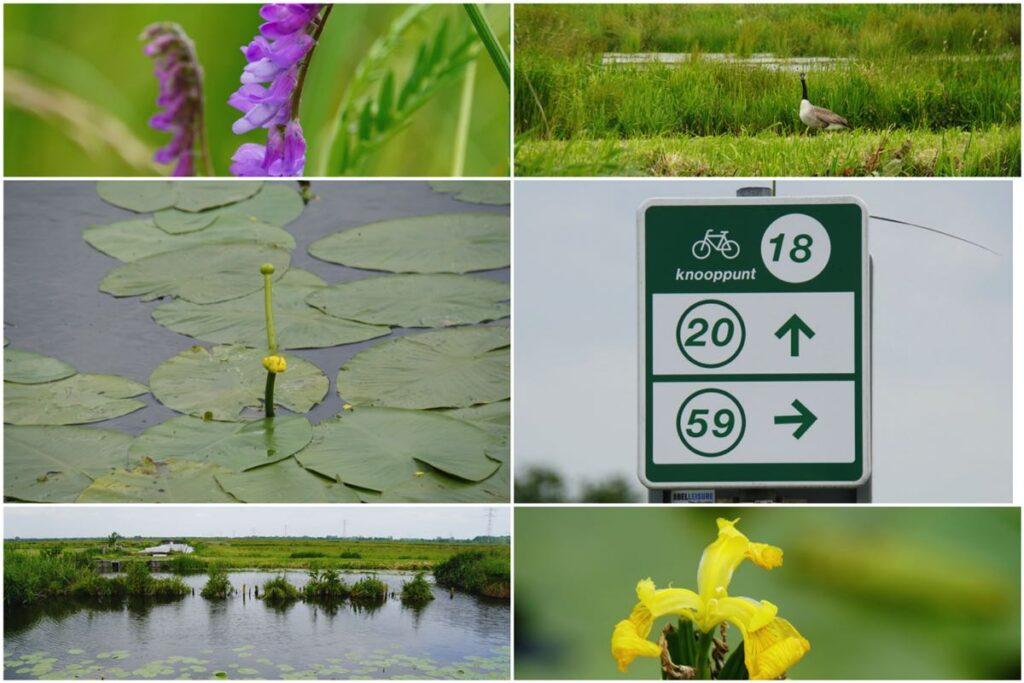 Fietsroute-Schoonhoven-natuur